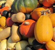 Pumpkins & Squashes by Cath Baker