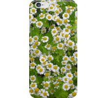 Yellow-centred white summer blossoms, for iPhone iPhone Case/Skin