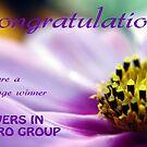 Flowers In Macro Challenge Banner by Rhonda Blais