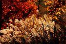 Fire in the Grass by Eileen McVey