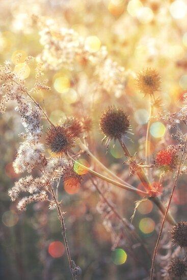 Magical light by Angela King-Jones