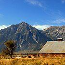 """""""Carson Valley Barn"""" by Lynn Bawden"""