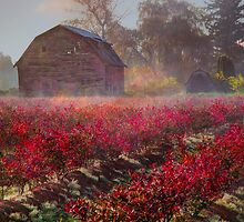Blueberry Field and Barn by Tracy Riddell