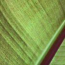 leaf cloth by yvesrossetti