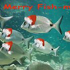 Fish Christmas Card: 3 by Heather Lawrence