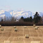 Rockies in the Background by dsimon