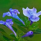 Blue On Green by Deborah  Benoit