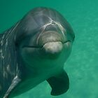 Friendly Dolphin by snefne