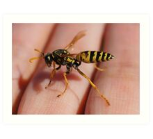 Paper Wasp Art Print
