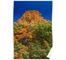 Maple Mountain Poster