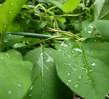 Wet Leaves  by Matt Corso