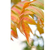 Color of Fall Photographic Print