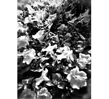 Vintage Flowers Photographic Print