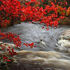 Autumn foliage over Crystal Creek Ontario Canada by Eros Fiacconi (Sooboy)