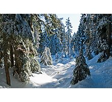 Beautiful BC Winter Day Photographic Print