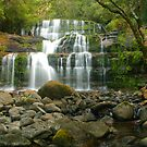 Liffey Falls in Tasmania by Michael Matthews
