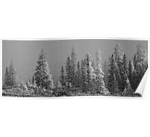 Algonquin Forest Poster