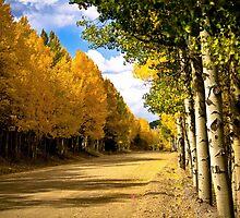 Autumn Journey by lookagain