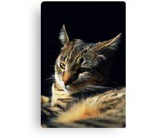 My Mini Wildcat Kitten Canvas Print