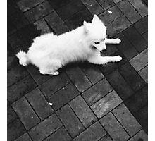 SOULMATES | THE DOG Photographic Print