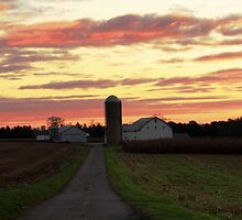 Dawn ~ Mount Joy Farm by reindeer