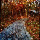 Walk in the Woods by teresa731