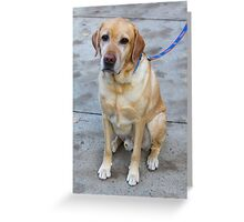 Gipper Lab Retriever Dog By Jonathan Green Greeting Card