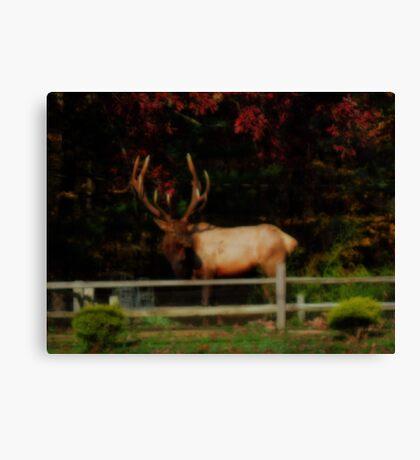 Bull Elk, PA Canvas Print