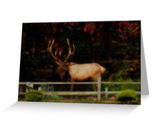 Bull Elk, PA Greeting Card