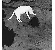 SOULMATES | THE CAT Photographic Print