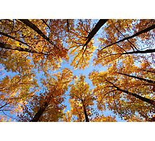 looking up to fall Photographic Print