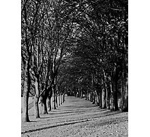 West End Park Photographic Print