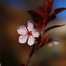 One Little Cherry Blossom by Erika  Hastings