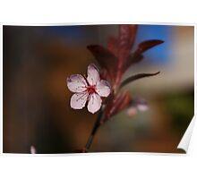One Little Cherry Blossom Poster
