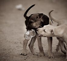 fight by Sajeev C Pillai