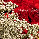 Season's Greetings by Shiju Sugunan