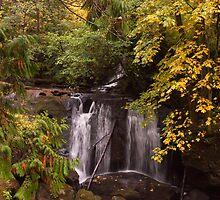 Whatcom Falls, Bellingham, WA by Barb White