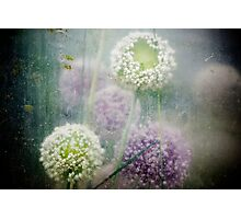 Greenhouse flowers Photographic Print
