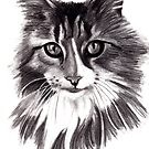 Sookie - the Maine Coon cat by Lauren Eldridge-Murray