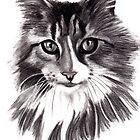 Sookie - the Maine Coon cat by Lauren Eldridge-Murray
