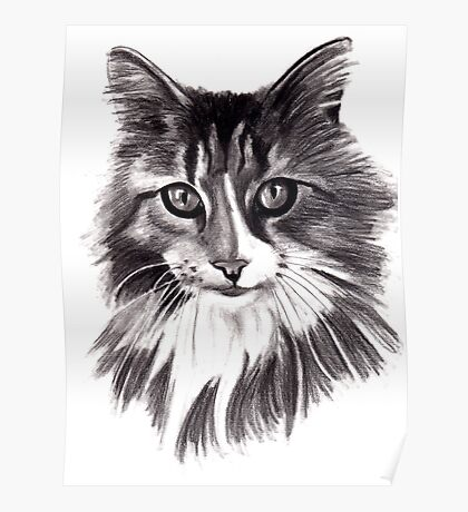 Sookie - the Maine Coon cat Poster