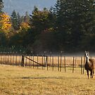 Llama by Barb White