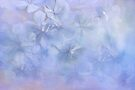 flower clouds by Teresa Pople