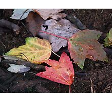 Autumn Color Convention Photographic Print