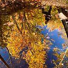 In autumn reflection. by LudaNayvelt