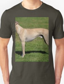Tiny Whippet