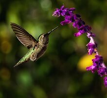 Precision (Humming Bird in Los Angeles, California USA) by Steve  Buffington