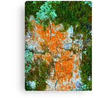 lichens and fungi Canvas Print