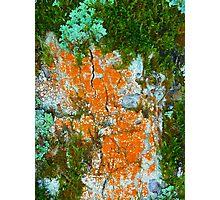 lichens and fungi Photographic Print