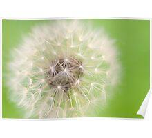 zesty twist on the dandelion Poster